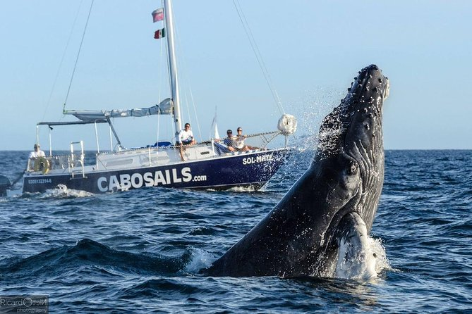Private 3-Hour Whale Watching Tour in Cabo San Lucas