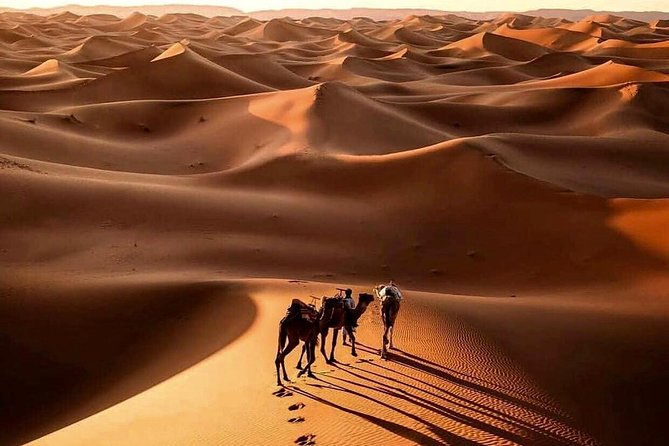 7 Days Luxury Desert Tour From Casablanca to Marrakech via fez -Camel trekking photo 1