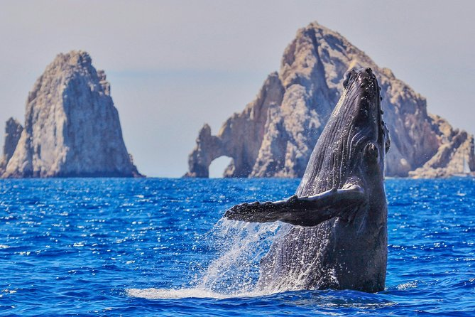 Whale Watching Tour in Glass Bottom Boat (VisitA Cabo)