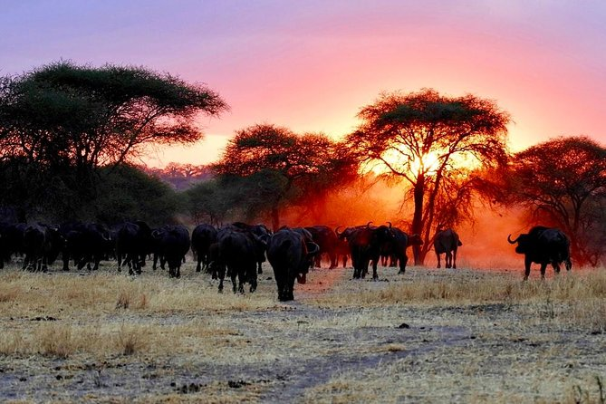 10 Days Wildlife Safari And Culture.