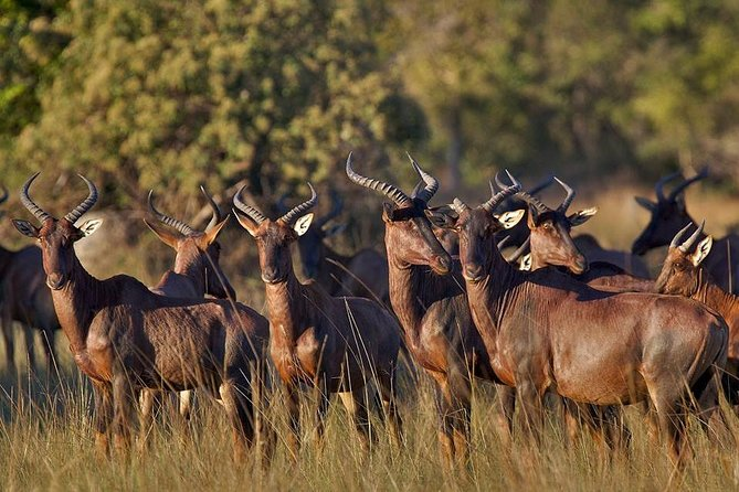 Cultural & Wildlife Tour in Lusaka (Zambia)