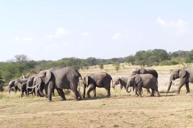 4 Days Tanzania Camping Safaris