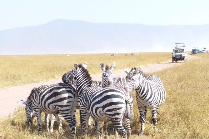 8 Days Tanzania Camping Safari Itinerary