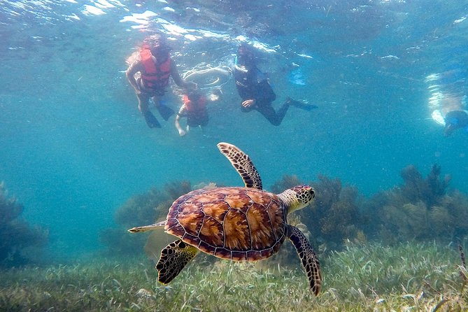 Puerto Morelos Snorkeling + 3 Cenotes + Zip-lines + Mayan Lunch - Free Pictures photo 4