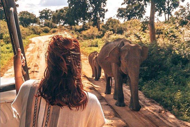 Full Day Tour to Polonnaruwa and Minneriya National Park