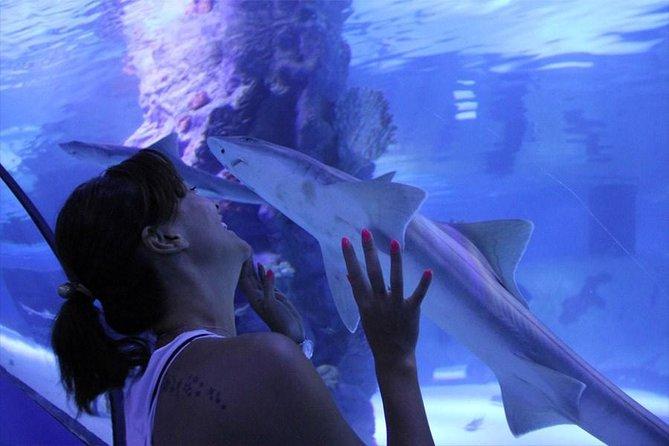 Istanbul Aquarium Tour - YK006