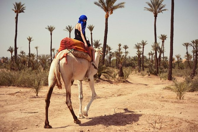 Guided Marrakech Camel Ride 2 hours