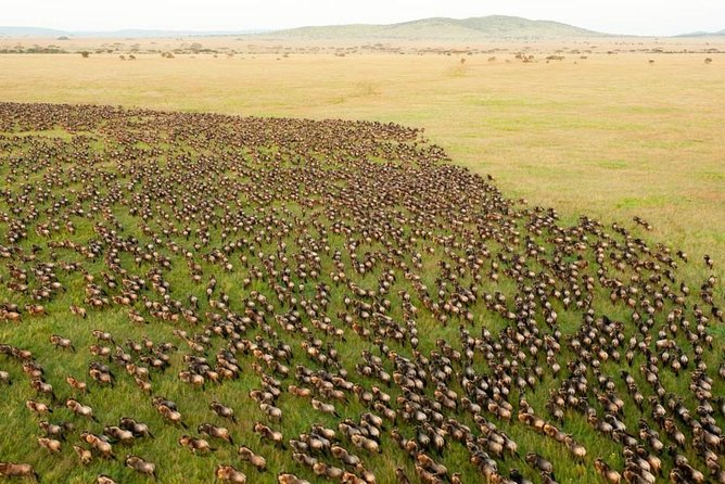 3 days Safari in Maasai Mara