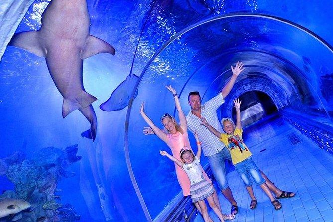 Skip the Line: Hurghada Grand Aquarium Entry Ticket and Tour