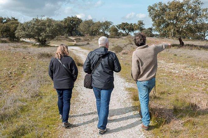 Golden Plains: Évora and Almendres Cromlech Shared Tour