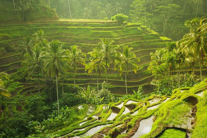 Private Custom Ubud Bali Tour ,Free Wifi