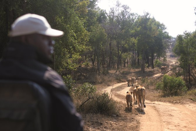 Kruger National Park Full Day Big 5 Safari Small Group Tour From South Africa photo 23