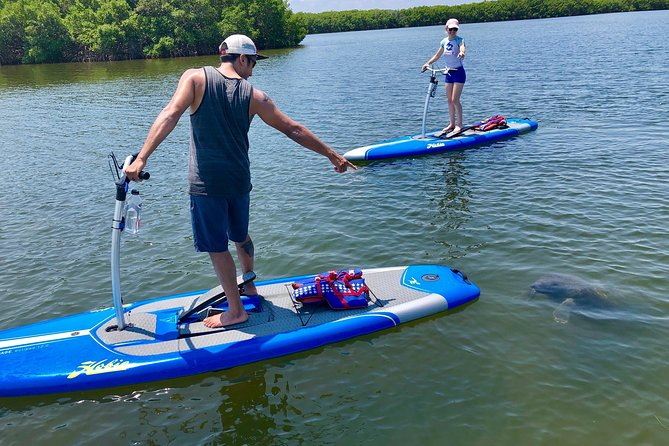 Tampa Bay Marine Life Stand Up Paddle Boarding Activity