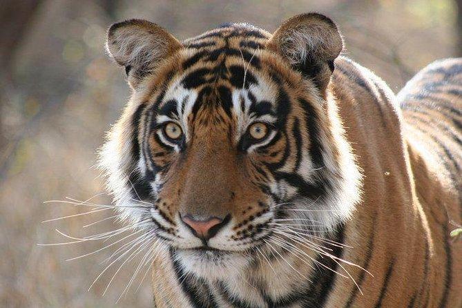 Delhi, Agra, Jaipur and Ranthambhore Tiger Safari Reserve 5-Day Tour