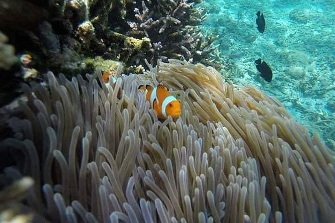 Bali Snorkling At Blue Lagoon All Inclusive Free Transport