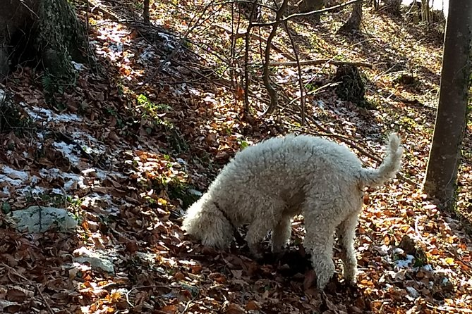 Truffle hunting and lunch experience in a restaurant