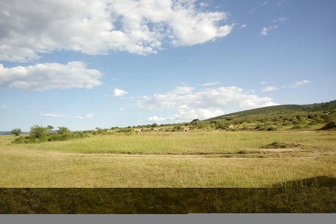 4 Days Masai Mara Nakuru