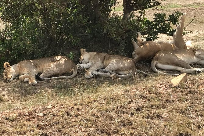 3 Days Maasai Mara Budget Group Safari