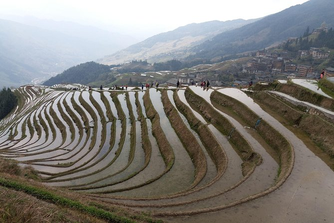Guilin Tea plantation and Longji Rice Terraces Day Tour from Yangshuo hotel