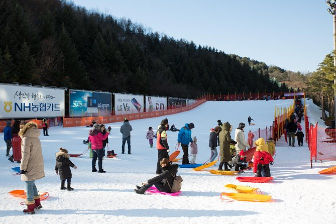 [Private Tour] Nami Island & Snow Viewing and Snow sled (More Members Less Cost)