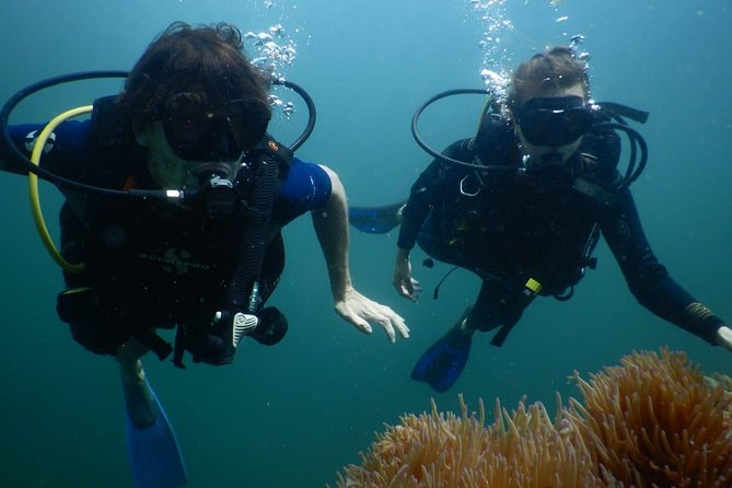 Red River Divers - Diving Trip for PADI Licensed and Non-Licensed Divers photo 3