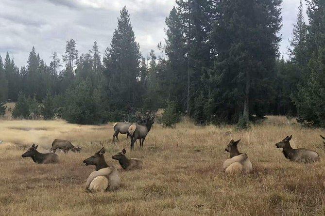 5-Day Yellowstone+Grand Teton National Park Tour ( Seattle departure ) SYG5