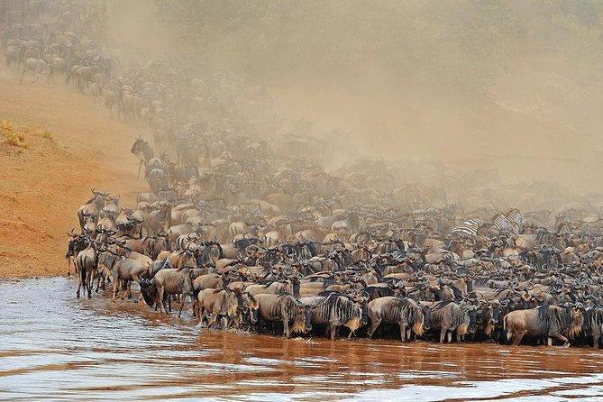 11 Day Serengeti Wildebeest Migration Tracking Safari