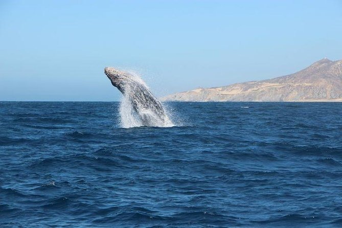 """Whale Watching Cabo up close & personal in a """"Glass Bottom Boat"""""""