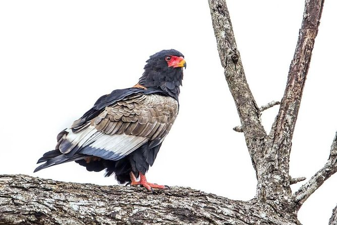 8 Day Birds Watching Safari to Eastern of Tanzania