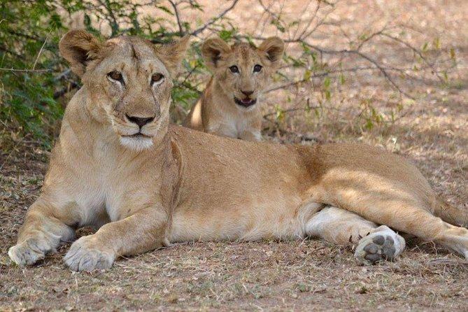 6 Day Tanzania BIG CATS Safari