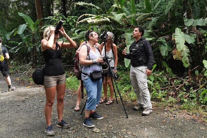 Looking for animals in Manuel Antonio National Park