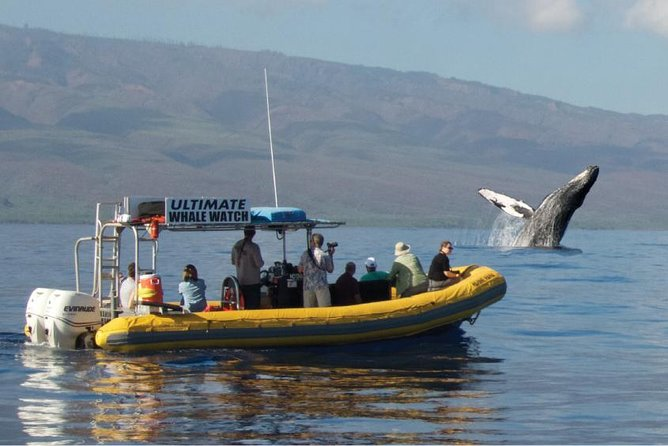 Ultimate 2-Hour Small Group Whale Watch Tour from Lahaina Harbor