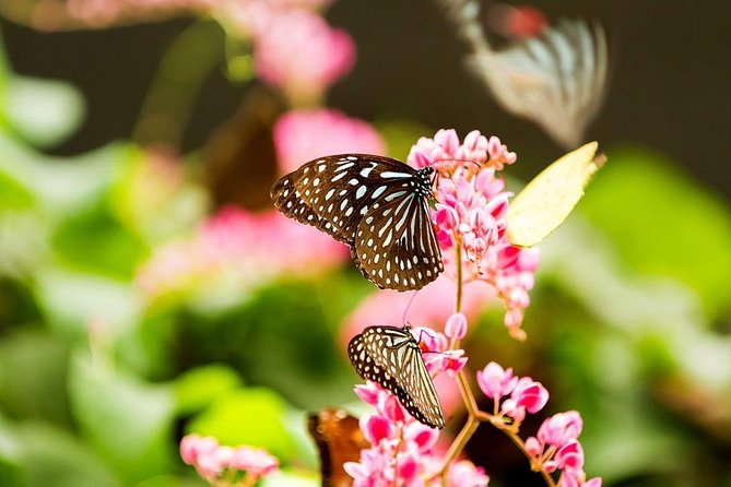 Kuala Lumpur Bird Park, Butterfly Farm And Taman Orkid Include All Entrance