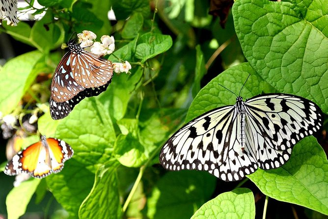 Bird Park & Butterfly Farm Nature Include All Entrance Tour From Kuala Lumpur