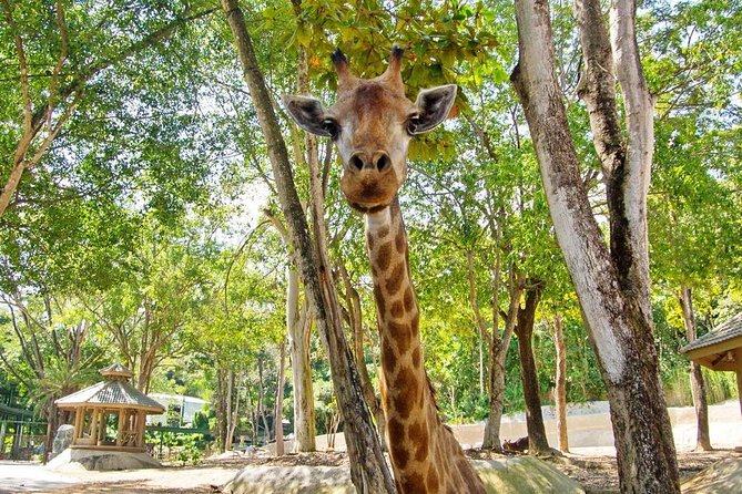 Chiang Mai Zoo Admission Ticket with Return Transfer