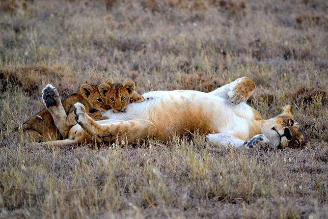 5 Day Tanzania Adventure Wildlife Safari photo 10