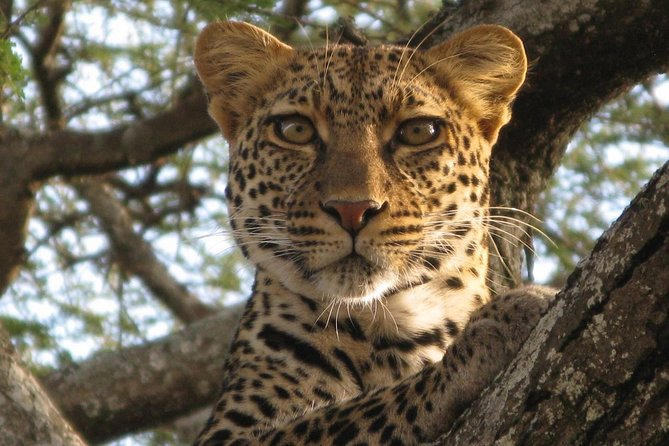 5 Day Tanzania Adventure Wildlife Safari photo 7