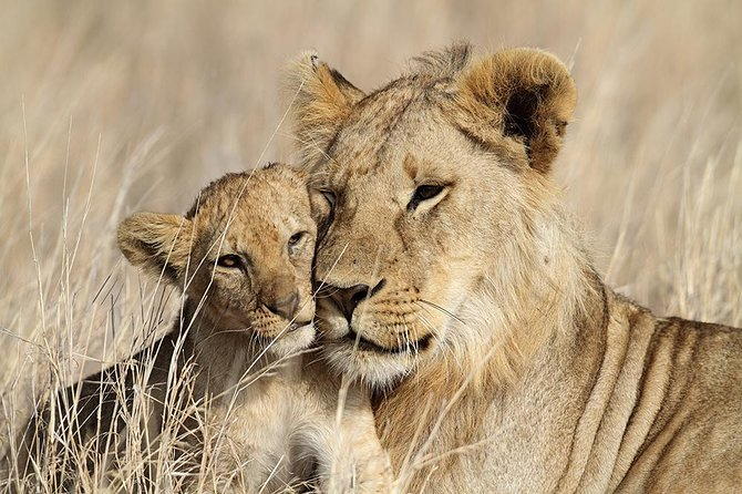 5 Day Tanzania Adventure Wildlife Safari photo 8