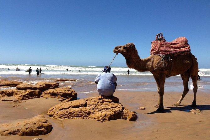 Marrakech to Essaouira Full day trip