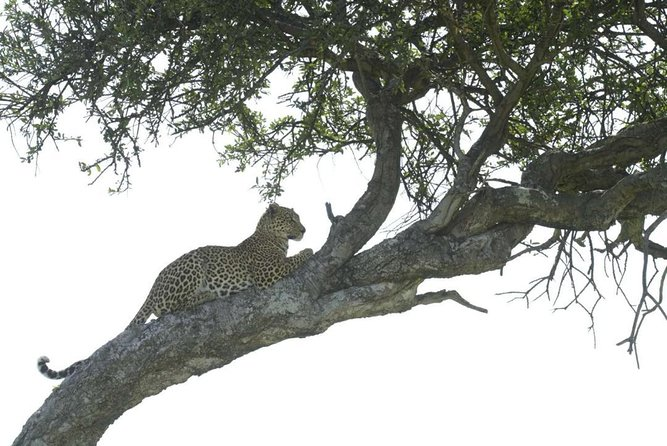 4-Day Camping Safari Including Serengeti & Ngorongoro photo 1