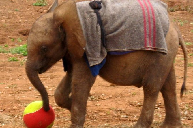 Day Tour- Nairobi National Park, Elephant Orphanage & Bomas of Kenya