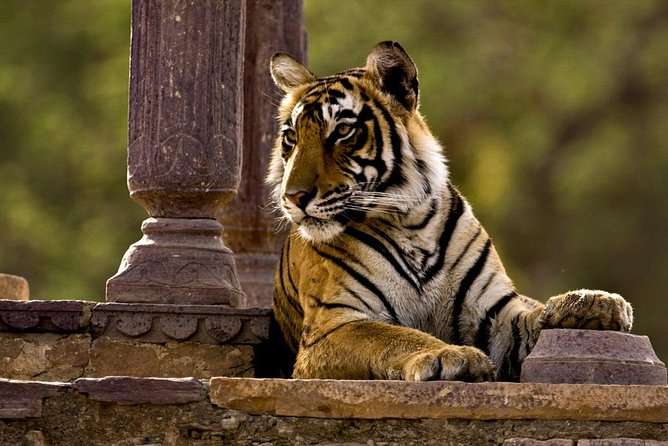 2 Days Jaipur + Ranthambore Tigers Tour (Transport Only + One Safari) From Delhi