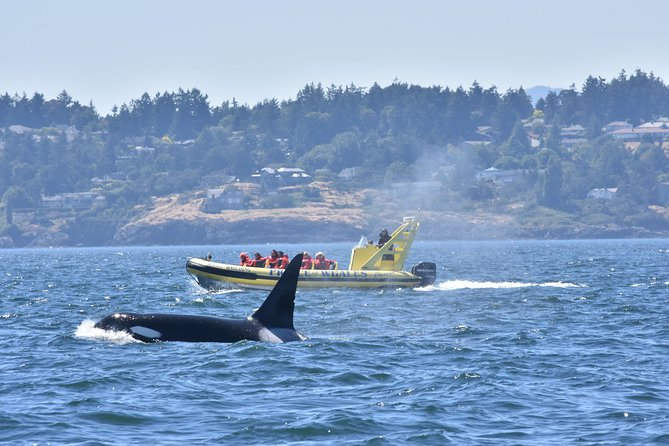 Private Zodiac Whale Watching Adventure from Victoria