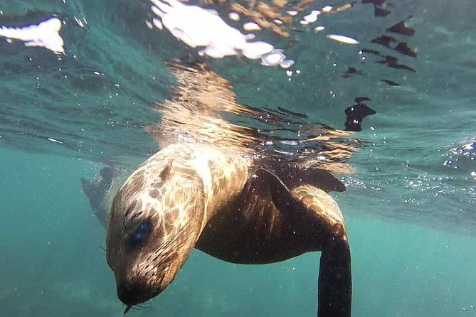 Snorkeling with Seals and Cape Peninsula Full-Day Private Tour