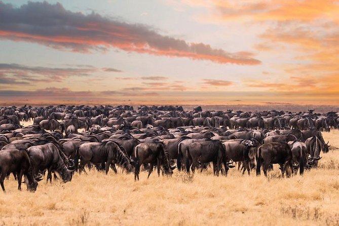 8 Day Spectacular Migration Serengeti mid -Range Tanzania Safari