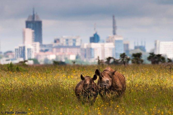 Nairobi National Park, Elephant Orphanage & Stedmak Gardens Animal Park Tour