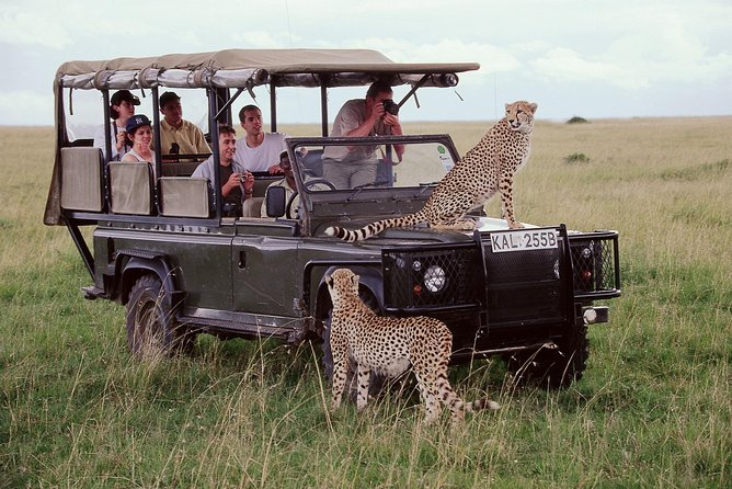5 Days Aberdares Lake Nakuru & Masai Mara Wildlife Safari