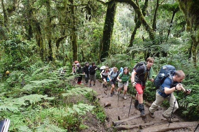6-Days Kilimanjaro Hiking Via Machame Route -With- Burigi Chato Safaris Co LTD
