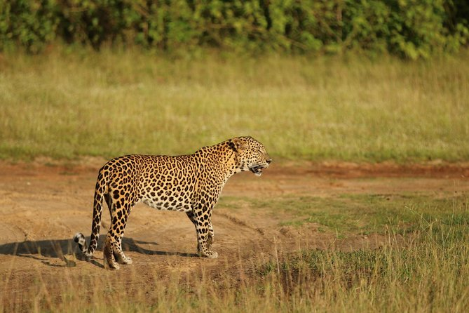 Wilpattu National Park Safari from ColomboNegombo by Private vehicle with Driver