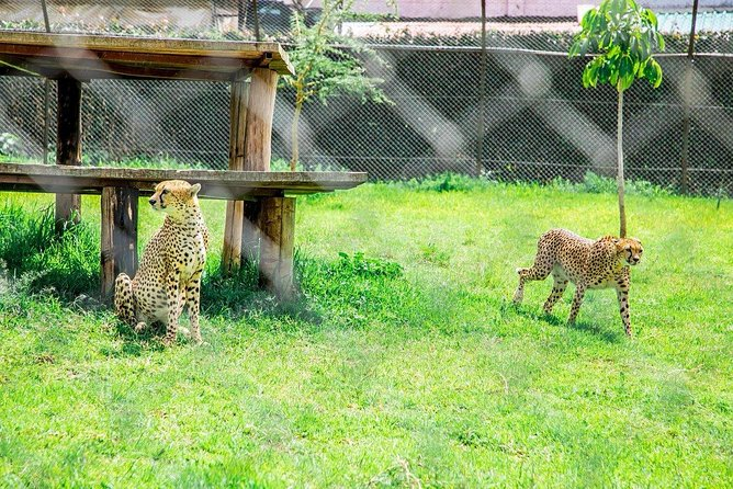 Kibera Slums and Stedmak Gardens Animal Park Guided Day Tour in Nairobi